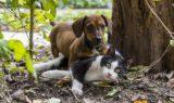 dog-2059668_640